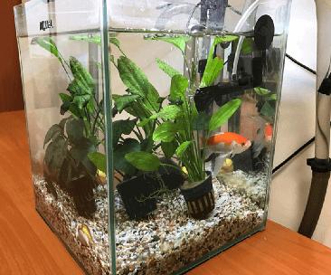 Аквариумные рыбки в офисе