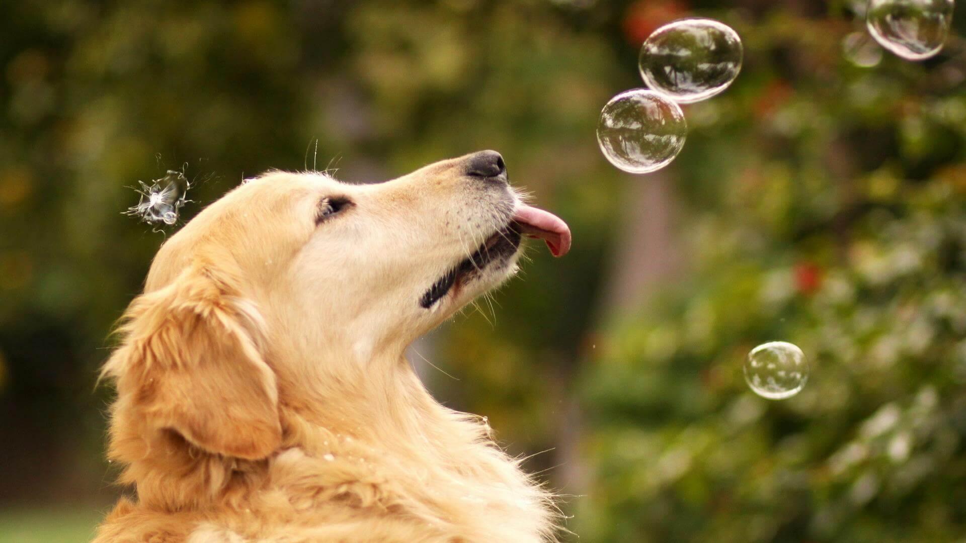 Милая собака ловит пузырьки